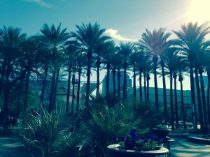 Tall palm trees overlook Arizona Center in downtown Phoenix, AZ.  Photo: P.Sullivan